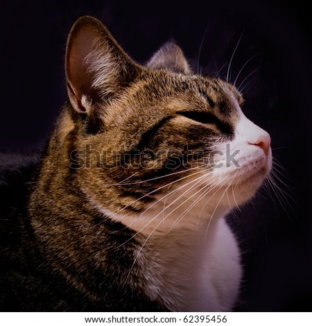 The pensive cat on black background - stock photo