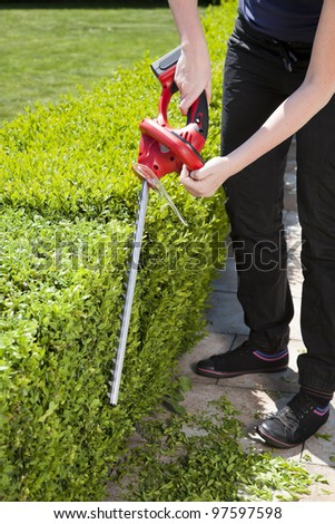 The person cuts the hedge by the Hedge trimmer - stock photo