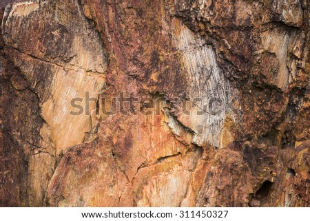 The Petrified Wood Texture Background