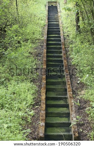 The Photography of steps, which are covered with algae and moss / Green stairs