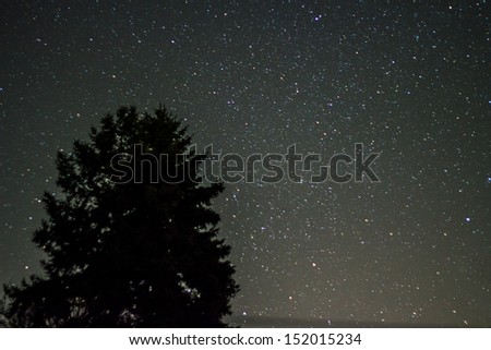 The picture shows a tree under a clear starry sky. - stock photo