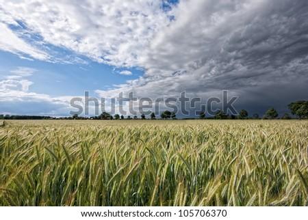 The picture shows a wheat field and a gathering storm. - stock photo