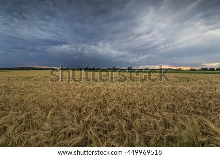 The picture shows Mammatus clouds above a field.