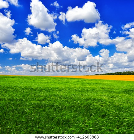 The picturesque field of young wheat against the cloudy blue sky in a summer sunny day.  Summer landscape. - stock photo