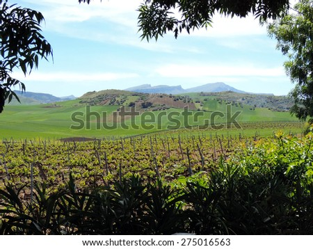 The picturesque landscape with a vineyard. Italy, Sicily.