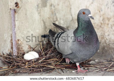 how to make pigeon nest