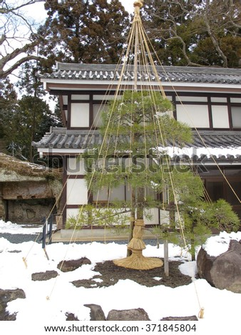 The pine tree protected by rope supports from snow - stock photo