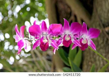 The Pink orchid on tree background.