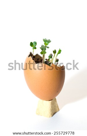 The plant grows from the soil, sprinkling in the egg on a white background