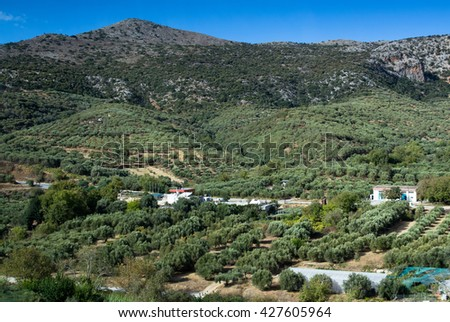The plantation of olive trees in the mountains of Dikti in Crete - stock photo