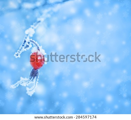 The plants covered with frost. Winter floral background. Christmas card with space for text. - stock photo