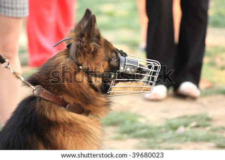 The police-dog defends safely hes proprietress - stock photo