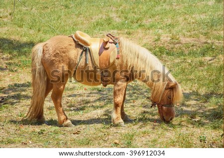 The Pony is Grazing in the Lawn - stock photo