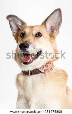the portrait mongrel dog on white background