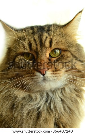 The portrait of a beautiful cat isolated on a white.