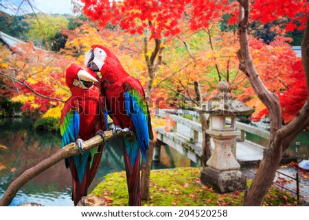 The potrait of Blue & Gold Macaw for adv or others purpose use - stock photo