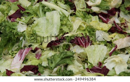 The Prepared Leaves of a Fresh Green Salad. - stock photo