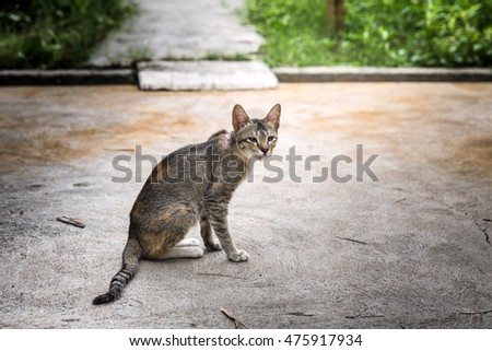 the pretty cat sitting on the floor - animals concept