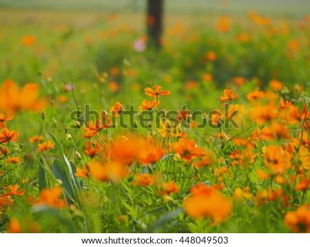Pretty summer flowers garden stock photo 448049503 shutterstock the pretty summer flowers in the garden mightylinksfo