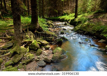 The primeval forest with mossed ground and the creek - HDR - stock photo