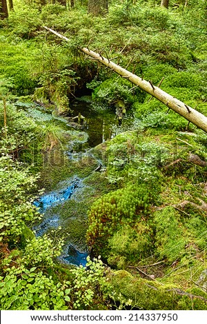 The primeval forest with mossed ground and the morass - HDR  - stock photo