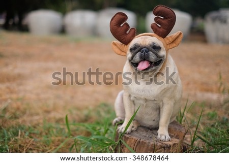 The pug dog wearing reindeer head band.