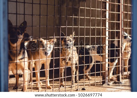 The puppies from the shelter are waiting for new masters, the puppies behind the fence are waiting to be adopted, street dogs are locked in cages in the animal shelter