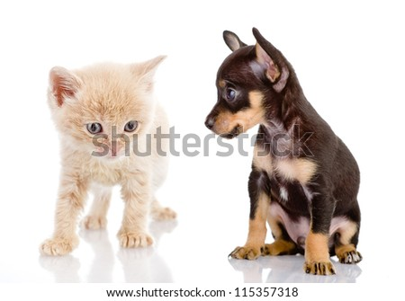 the puppy looks at a kitten. isolated on white background - stock photo