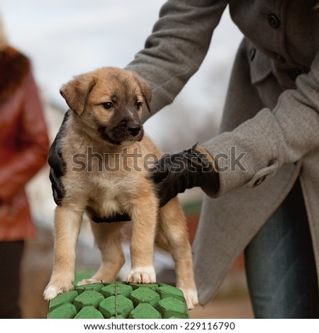 The puppy of light color costs with support of hands of the person - stock photo