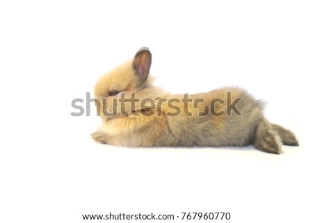 The rabbit on the isolate white background