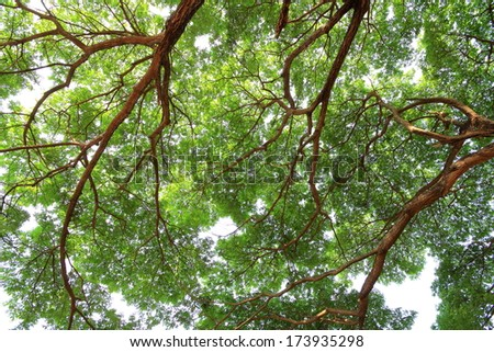 The Rain Tree - stock photo