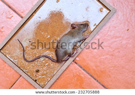 Rat Traps Stock Images Royalty Free Images Amp Vectors