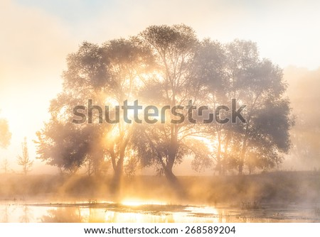 The rays of Sun through a fog and tree's silhouette at dawn - stock photo