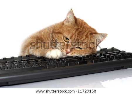 The red cat lays on the keyboard