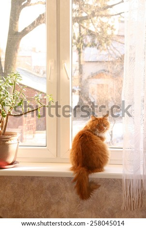 the red cat sits on a window at a window trees. - stock photo