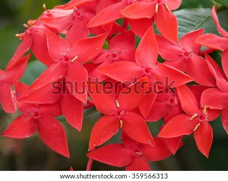 the red flowers, Rauvolfia serpentine