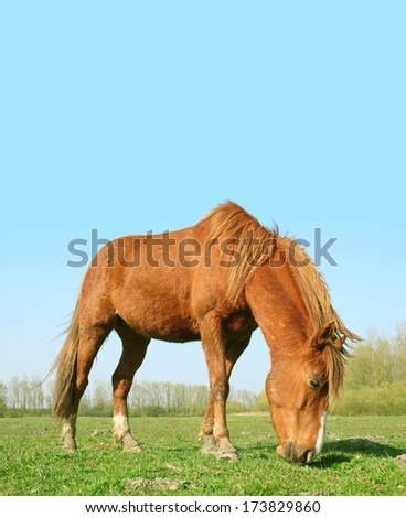The red horse - stock photo