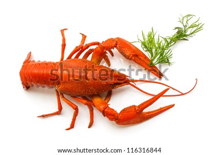 the red lobster on a white background - stock photo