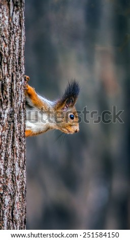 The red squirrel sitting on trunk of tree in a moscow Izmailovsky park - stock photo