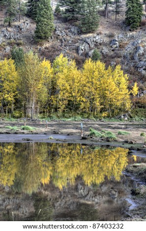 The reflection off the water of the yellow leaves on the trees in Hauser Lake, Idaho.