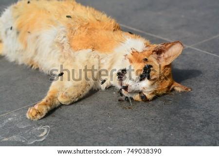Free Dead Cat