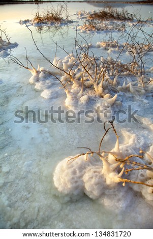 The remains of plants on the seashore of the Dead Sea in Israel, almost completely covered with salt in very shallow waters. Shot at dawn. - stock photo