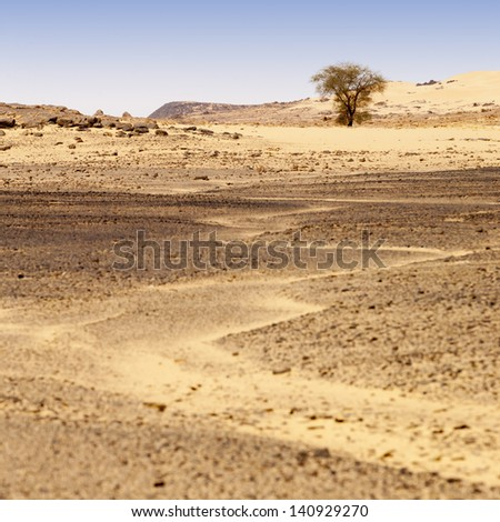 The removed rocks the remains of ancient volcanoes in the middle of desert. Dense sand with edge structure. The Libyan desert - a fantastic place for travelers and photographers.