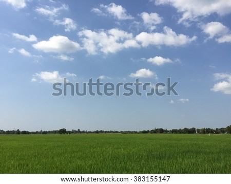 The rice farm at afternoon