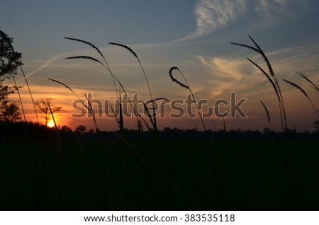 the rice fields in sunset in upcountry of Thailand