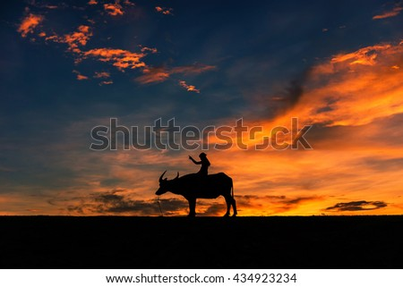 The rider with Buffalo evening light. Thailand is a way of life.In Thailand.