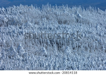 The rime on trees - stock photo