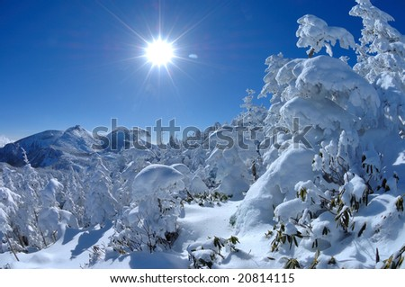 The rime on trees and the sun - stock photo