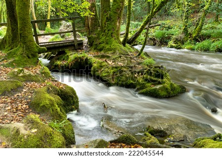 The river Fowey as it flows through Golitha Falls a steep wooded valley of Beech trees on Bodmin Moor in Cornwall