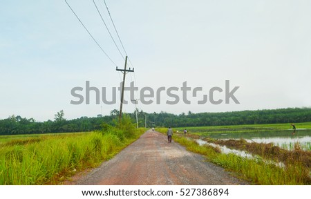 The road between rice field  in Thailand  countryside
